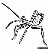 Assassin Insect Bug Coloring Clipart Silverfish Assasin Clipground Template Experts Any sketch template