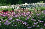 Gardens & Collections at Nichols Arboretum | Matthaei ...