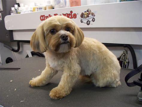 Club Doggie Mobile Grooming Salon