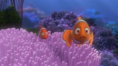 Nemo Finding Disney Coral Animated Deaths Gifer