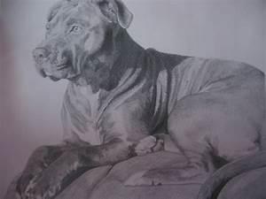 Pitbull Dog Drawings In Pencil