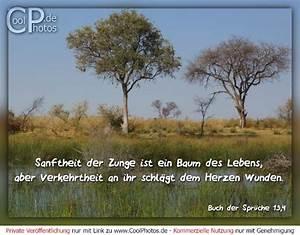 Baum Der Liebe : uranishi1benten zitate liebe baum ~ Eleganceandgraceweddings.com Haus und Dekorationen