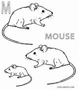 Mouse Coloring Pages Printable Cool2bkids Sheets Preschool sketch template