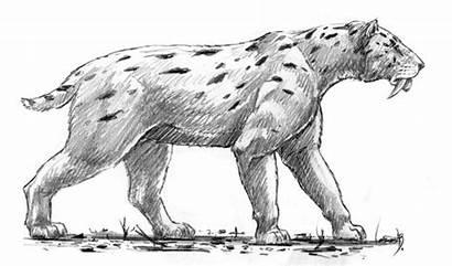 Smilodon Sable Dientes Populator Tigre Animal