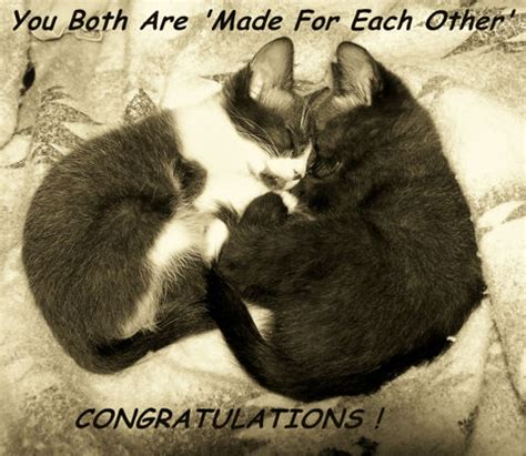 wedding congrat cats  congratulations ecards greeting cards