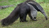 What Animals Live In The Amazon Rainforest? | Amazon ...