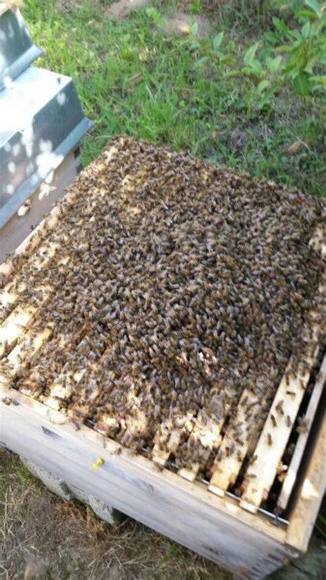 bienenvolk kaufen bienenvolk kleinanzeigen bauernhof kaufen verkaufen