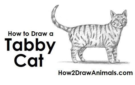 How To Draw A Cat (tabby