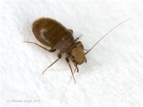 insectes dans la cuisine image gallery insectes de maison