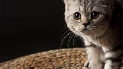 Cat Wallpapers Cats Wallpapersafari Kitten Code