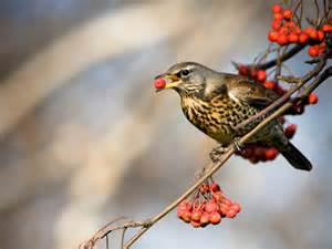 home theatre interiors the fieldfare population identification