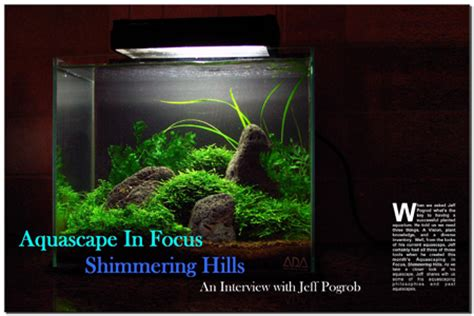Aquascaping Magazine by Aquascaping World Magazine With Jeff P