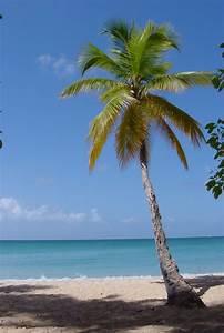 Beach Palm Trees: October 2009