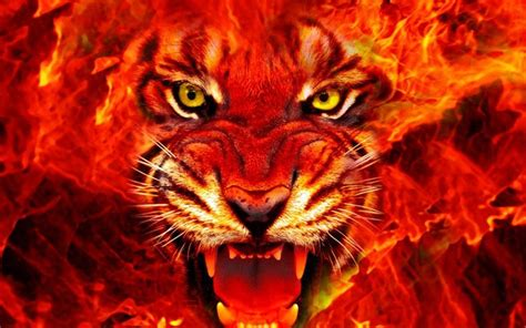 animal tiger face fire  ultra hd wallpapers  desktop