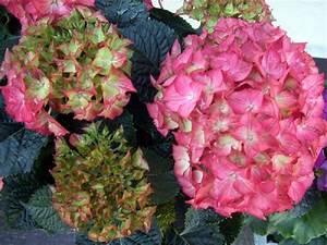 Garten Blumen Pflanzen : blumenfotos verschiedene blumen 2 pflanzen garten blumen ~ Markanthonyermac.com Haus und Dekorationen