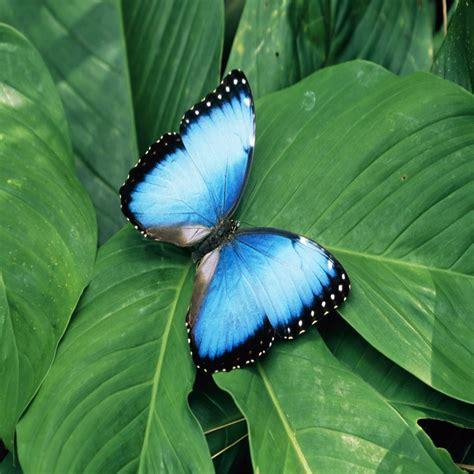 jeux de fille gratuit cuisine papillon magnifique et