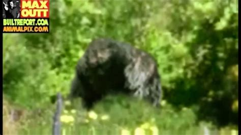 Humboldt County Bigfoot Picture Analyzed (2013 Picture ...
