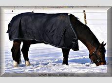 Pferd Bilder kostenlos