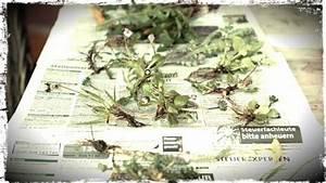 Was Ist Ein Herbarium : was ist eigentlich ein herbarium irgendwas ist doch immer ~ A.2002-acura-tl-radio.info Haus und Dekorationen