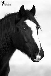 Black and white horse, Glenbow Provincial Park, landscape ...