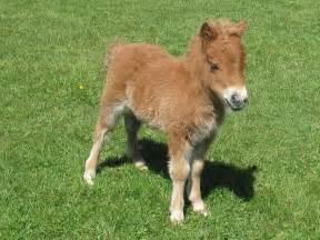 Really Cute Baby Horses