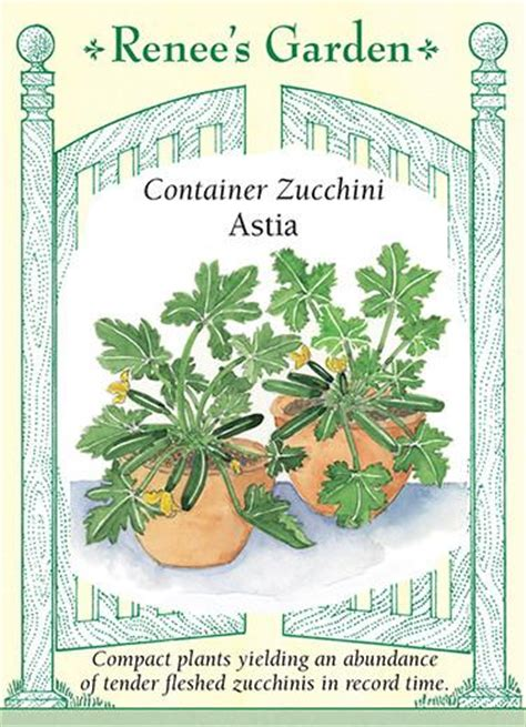 astia container zucchini renees garden seeds