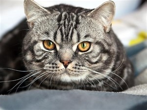 new about cat cats adoption bringing a cat home and care