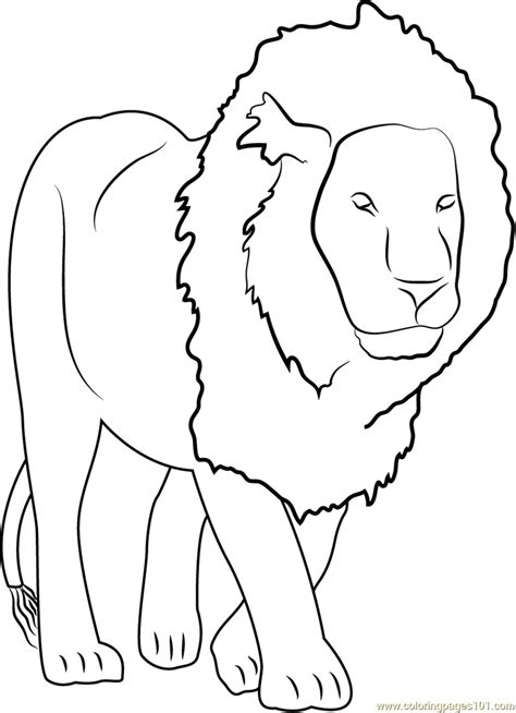 lion coloring page  lion coloring pages