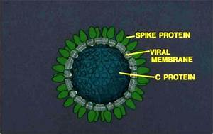 Protect Health       Protect Life  Classification Of Viruses