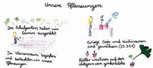 Was Brauchen Pflanzen Zum Wachsen : ein samenkorn eine pflanze ~ Frokenaadalensverden.com Haus und Dekorationen