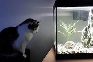 How Long Should Aquarium Lights Be Left On?