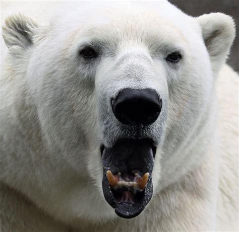 animal extreme close ups animal facts encyclopedia