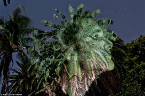 photographer david stefanoff creates portraits  trees
