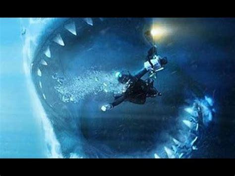 megalodon shark proofevidence   worlds largest