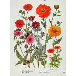 the gardeners color wheel plant flower gardening guide