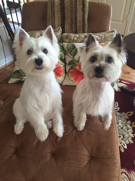 tiffany kennels   pet boardingpet sitting