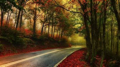 Nature Fall Trees Morning Road Hdr Landscape