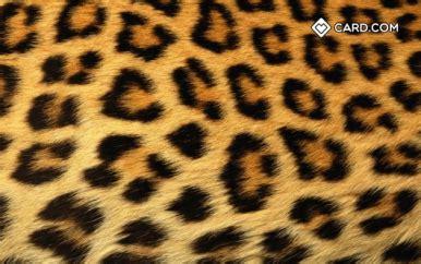 leopard print design cardcom prepaid visa card cardcom