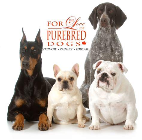 dogs purebred dog