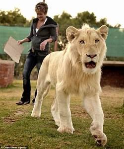 Image Gallery pet lion