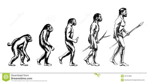 human evolution illustration stock vector illustration