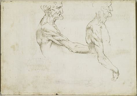 Tavole Anatomiche by Tavole Colonna Vertebrale Magnificamente Leonardo