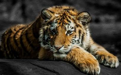 Ugly Animals Wallpapers