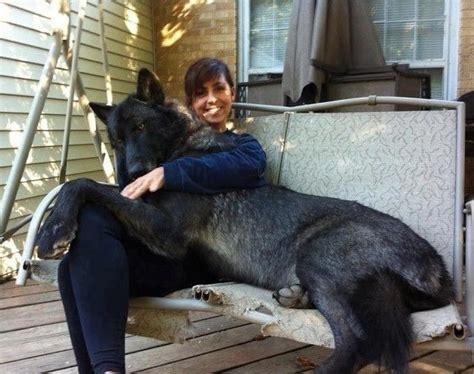 Irish Wolfhound Extra Large Dog Breeds In Dog  Want. Please Open Door Slowly Sign. Propane Garage Heaters. Garage Door Service Company. Chamberlain Keyless Garage Door Opener. Garage Door Winding Bars. How To Make Sliding Doors. Front Doors Miami. Overhead Garage Heater
