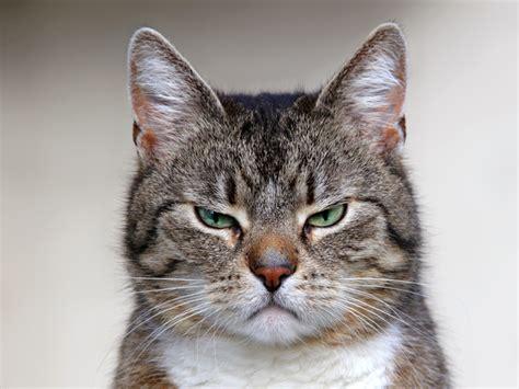 lustige katzenfotos oder wer hat hier den spass