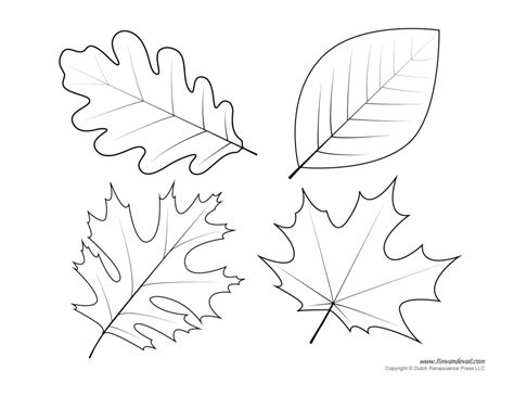 leaf coloring pages   print