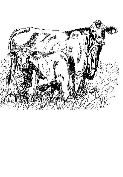 kids  funcom  coloring pages  cows