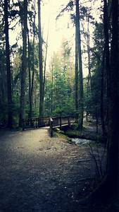 nature, , forest, , peaceful, wallpapers, hd, , , , desktop, and