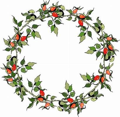 Wreath Watercolor Botanical Watercolour Imagens Artesanato Round