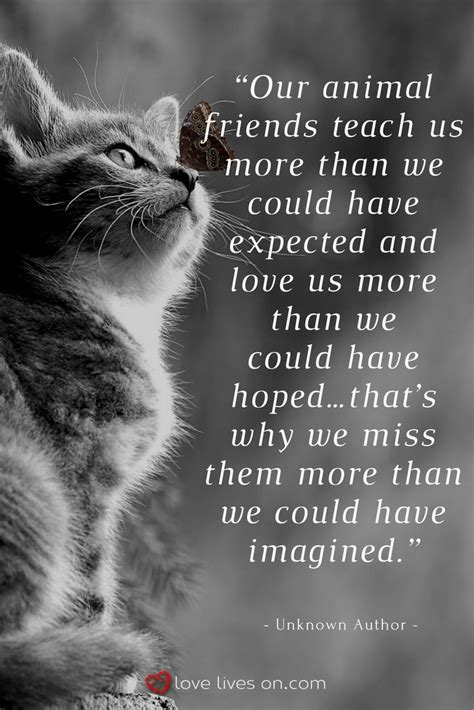 100+ Best Sympathy Quotes | Pet grief, Animal quotes, Cat